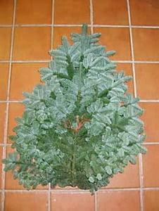 dækgran nobilis i billig julebutik