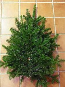 dækgran normann i billig julebutik